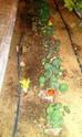 Mon petit jardin secret :D - Page 2 Imag0113
