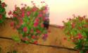 Mon petit jardin secret :D - Page 2 Imag0115