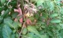 Mon petit jardin secret :D - Page 2 Imag0117