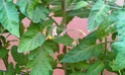 Mon petit jardin secret :D - Page 2 Imag0118