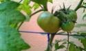 Mon petit jardin secret :D Imag0119