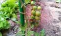 Mon petit jardin secret :D - Page 2 Imag0120