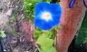 Mon petit jardin secret :D - Page 2 Imag0121