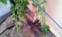 Mon petit jardin secret :D - Page 2 Imag0122