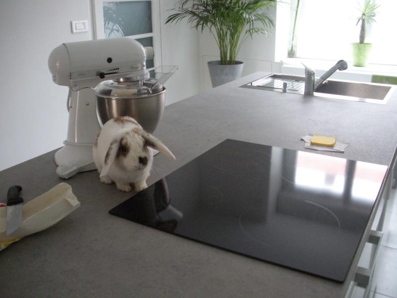 Nina, lapine bélier, née en aout 2011 Dscn9710