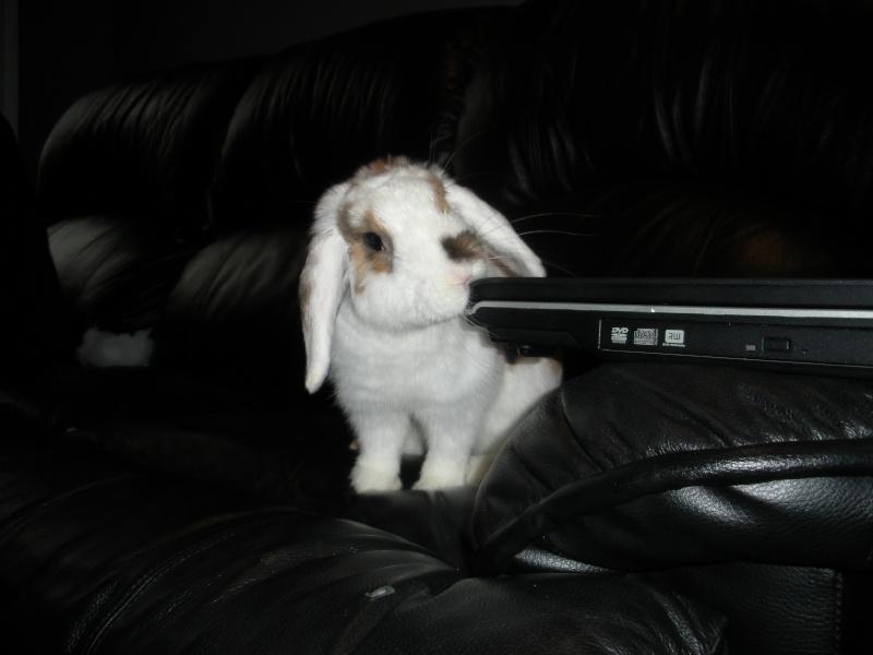 Nina, lapine bélier, née en aout 2011 Dscn9711