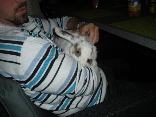 Nina, lapine bélier, née en aout 2011 - Page 2 Dscn9812