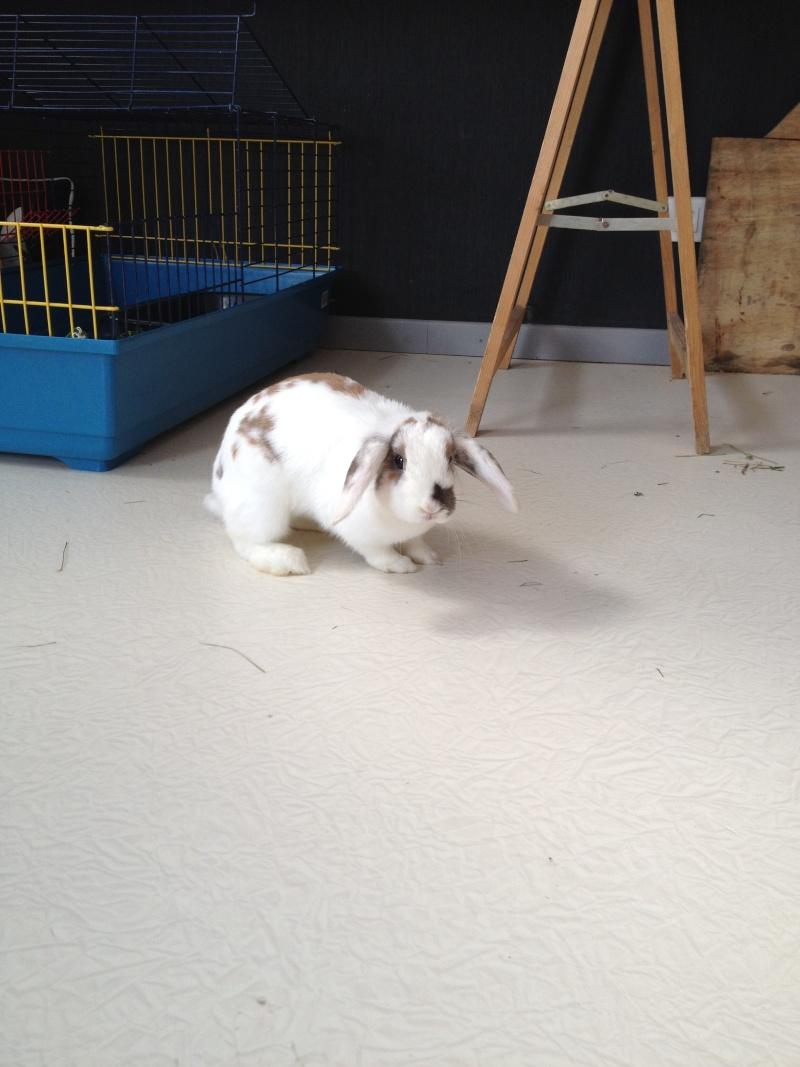 Nina, lapine bélier, née en aout 2011 Img_1214