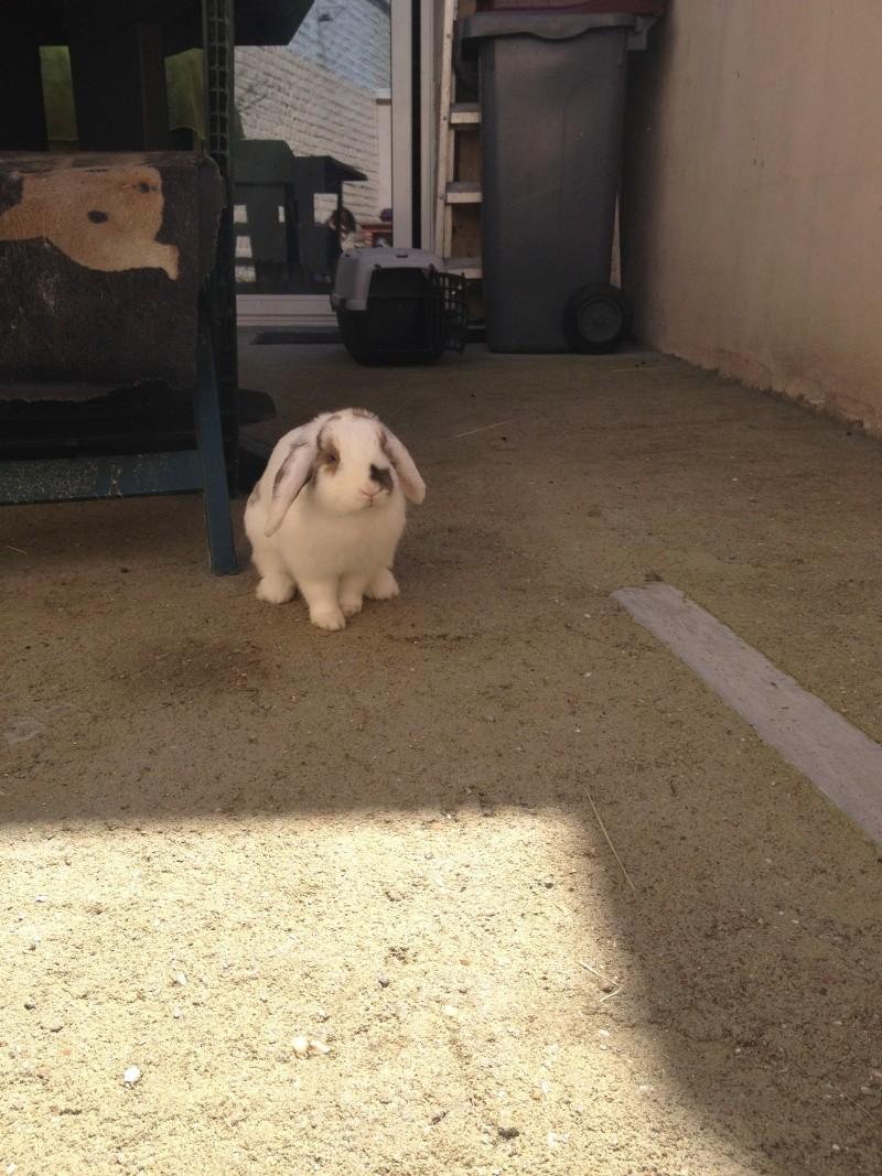 Nina, lapine bélier, née en aout 2011 Img_1215