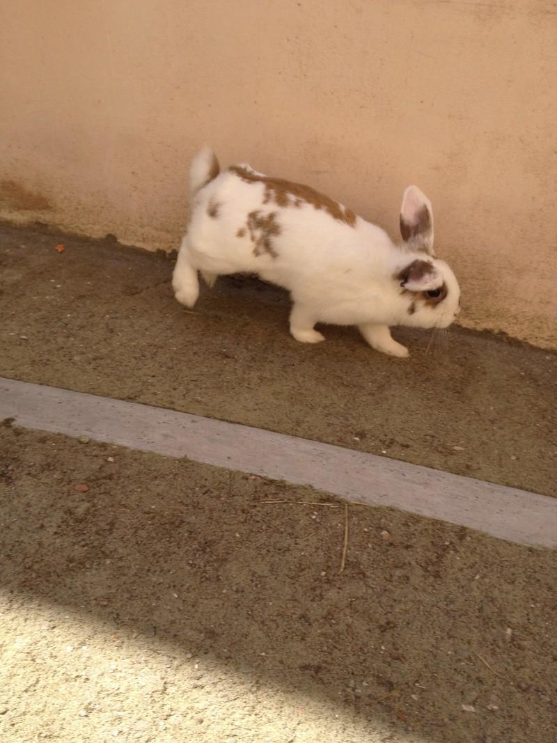 Nina, lapine bélier, née en aout 2011 Img_1218