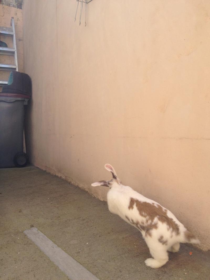 Nina, lapine bélier, née en aout 2011 Img_1219