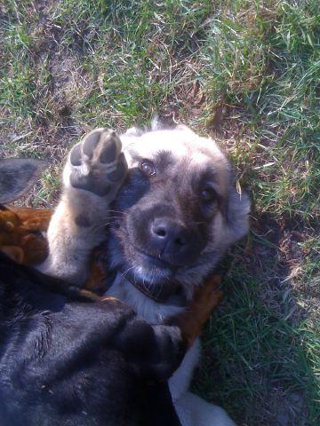 Мои любимые собаки Img08710