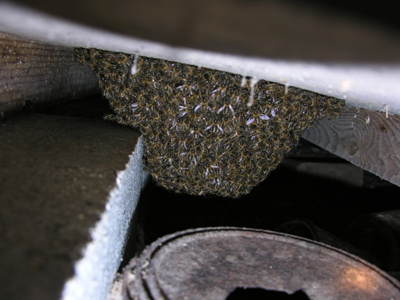 un essaim installé compliqué Dscn5028