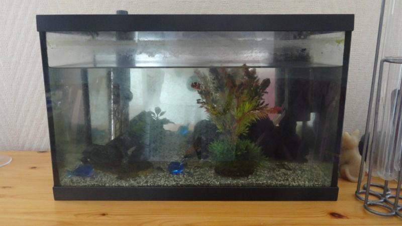 Installation de mon premier aquarium Aqua11