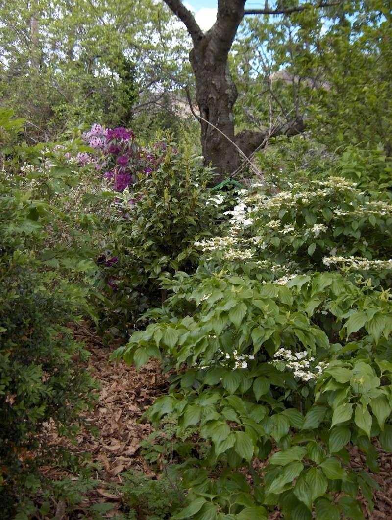 Petit tour du jardin côté montagne Pivoin13