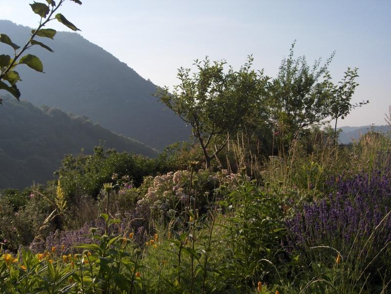 Petit tour du jardin côté montagne Pommie15