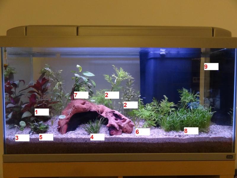 Nouveau Bac 100L avec Plantes sur sol Aquasable Aqua110