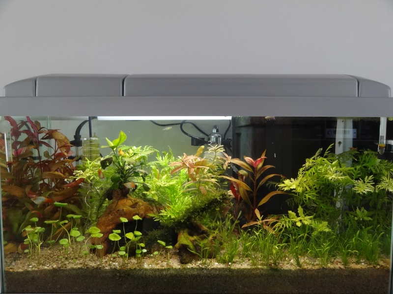Nouveau Bac 100L avec Plantes sur sol Aquasable Dsc03110