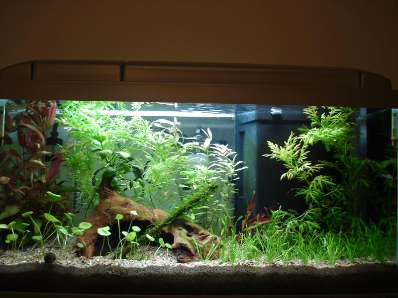Nouveau Bac 100L avec Plantes sur sol Aquasable Dsc09012