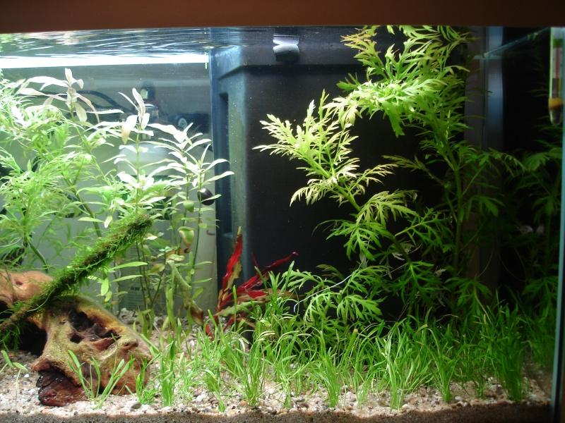 Nouveau Bac 100L avec Plantes sur sol Aquasable Dsc09013