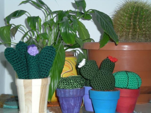 Piantine grasse...pollice verde assicurato! Foto_011