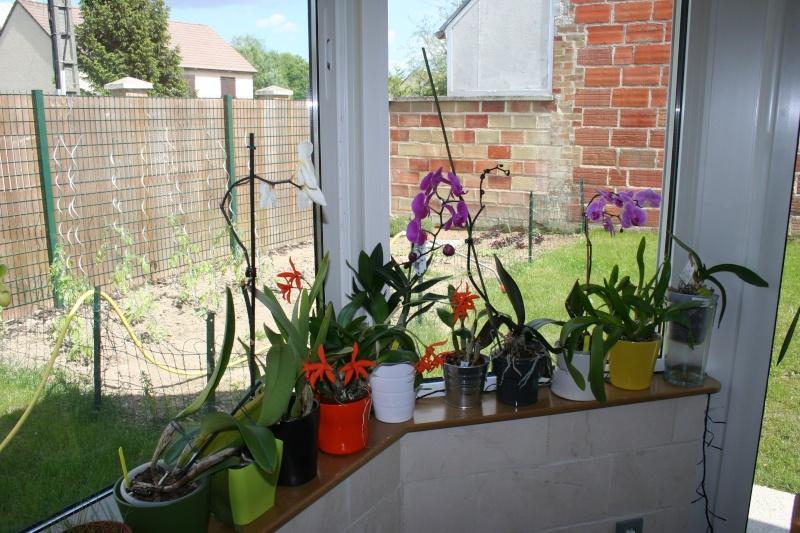 mon jardin d'orchidées ...avec exemple de plante en stress (avant et après ) Img_2226