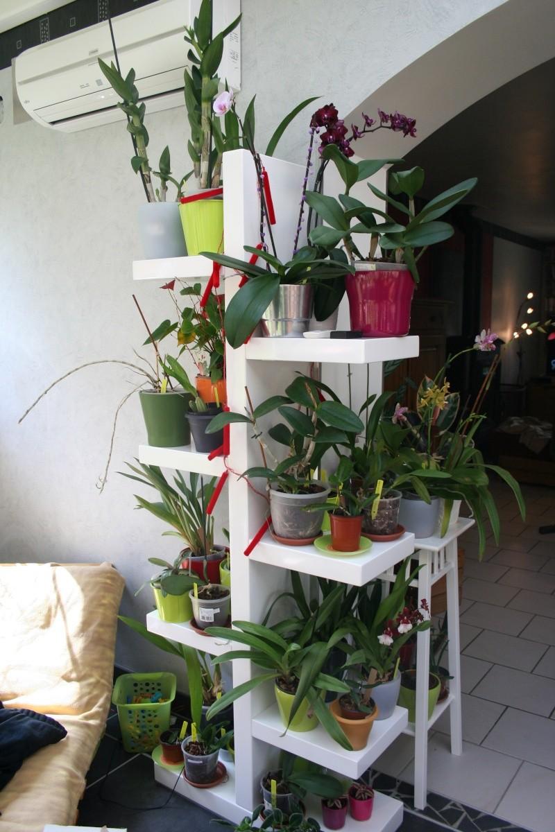 mon jardin d'orchidées ...avec exemple de plante en stress (avant et après ) Img_2227