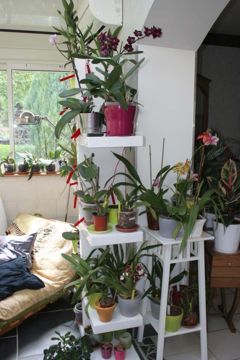 mon jardin d'orchidées ...avec exemple de plante en stress (avant et après ) Img_2228