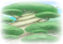 Bosque Sol