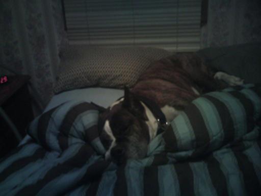 Yes,I'm Comfy Mace210