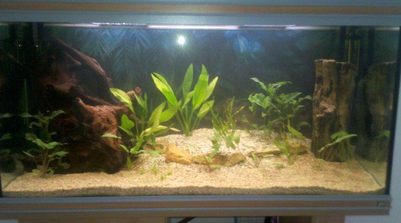 mon aquarium 180l 2012-012