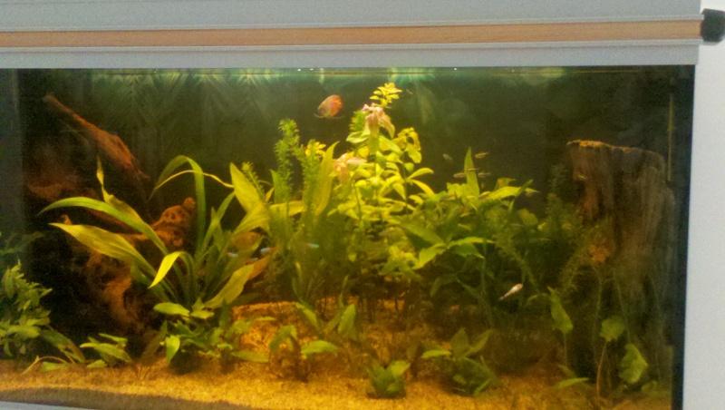 mon aquarium 180l 2012-014