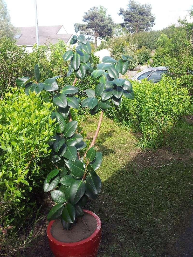 Identification de 3 plantes 20120513