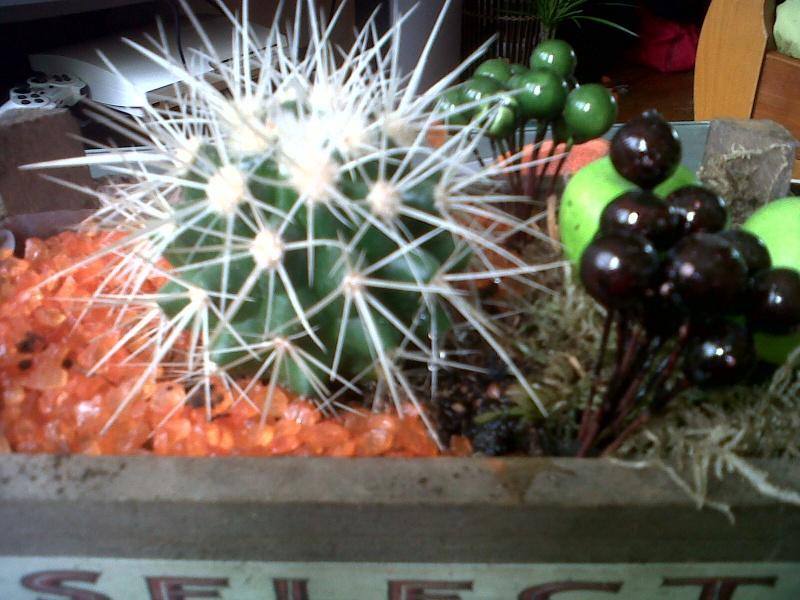 Identification de 3 plantes Img00012