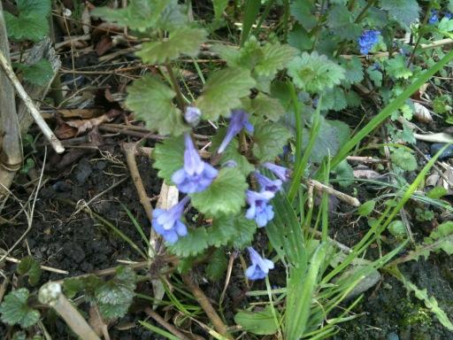 Plante mystere Plante11