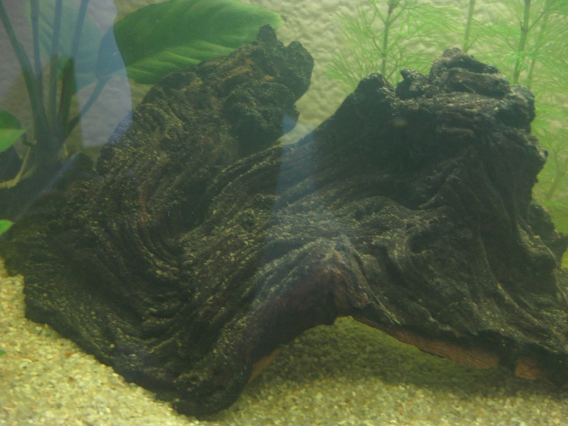 Mon premier aquarium Img_8212