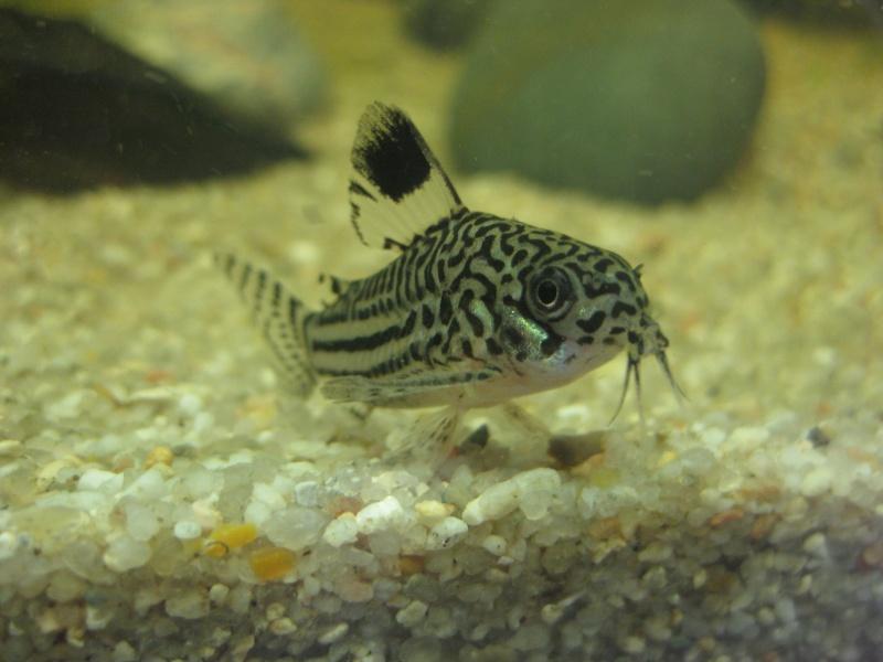 Mon premier aquarium Img_8410