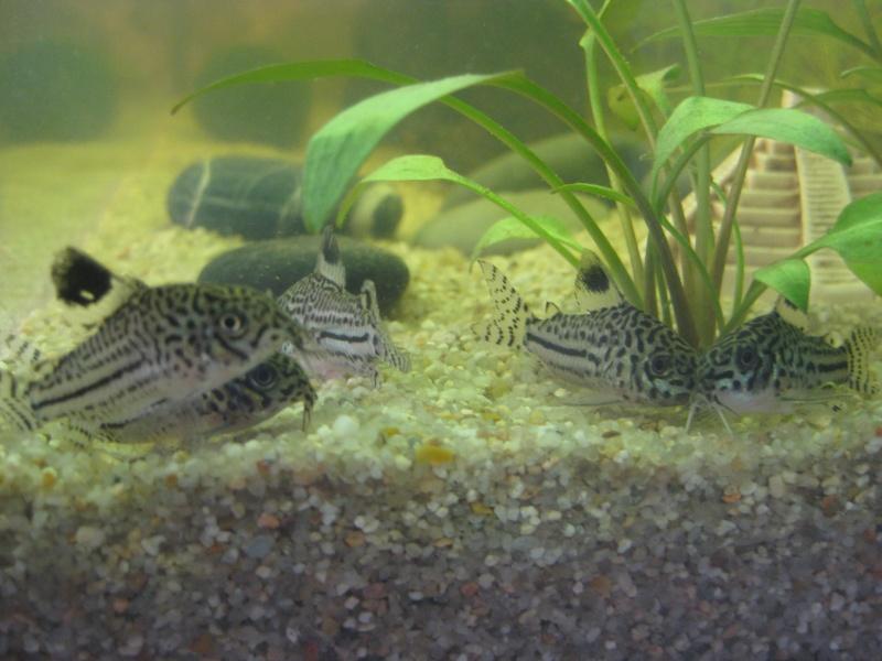 Mon premier aquarium Img_8411