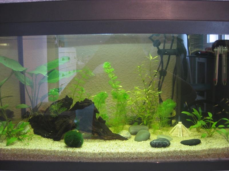 Mon premier aquarium Img_8612