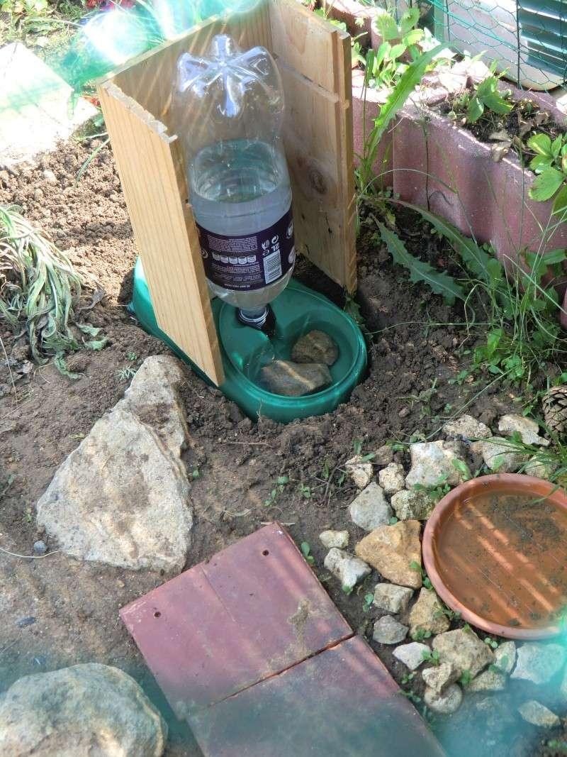 Distributeur d'eau pour les vacances Cimg3914