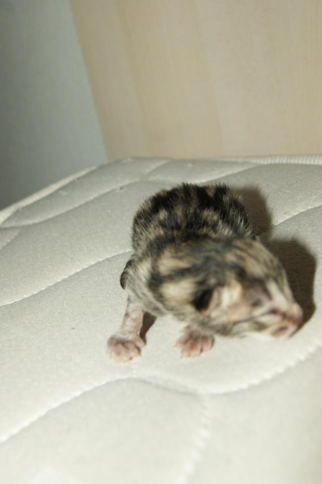 5 petits nouveaux !!  Dsc01722