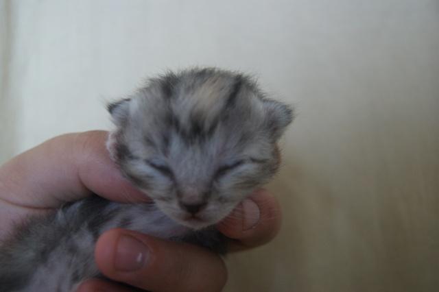 5 petits nouveaux !!  Dsc01814
