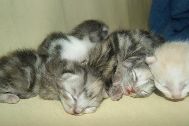 5 petits nouveaux !!  Dsc01819