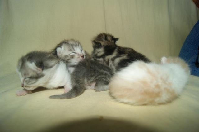 5 petits nouveaux !!  Dsc01825