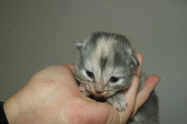 5 petits nouveaux !!  Dsc01925