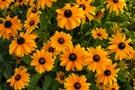 Photos gratuites et libres de droits de fleurs