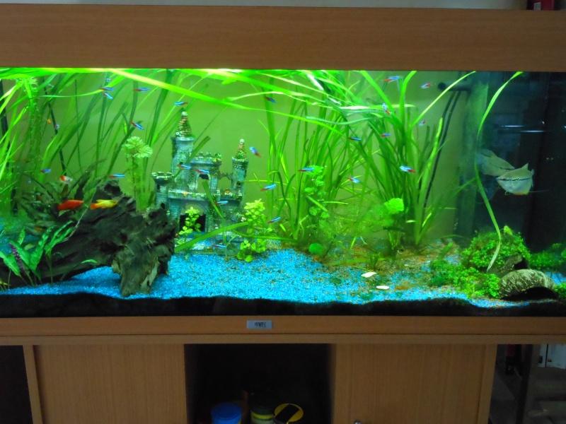 aquarium juwel 180 Dscn0010