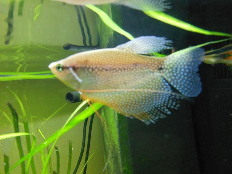 aquarium juwel 180 Dscn0011