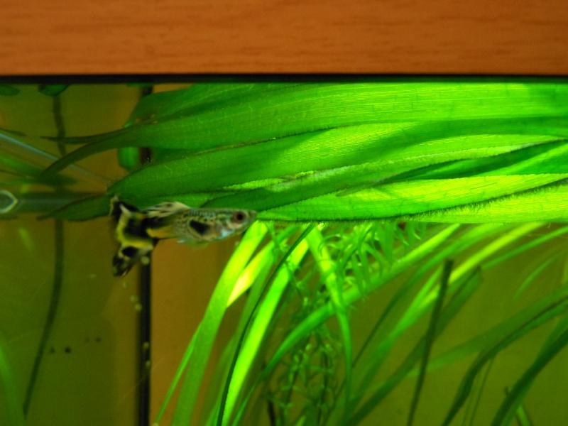 aquarium juwel 180 Dscn0014