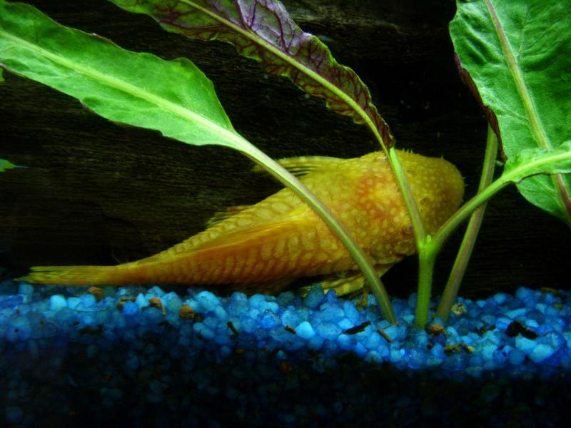 aquarium juwel 180 St833716